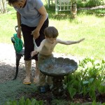 birdbath060311d