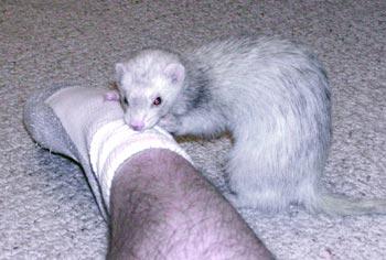 Loki attacking Jeremy's foot