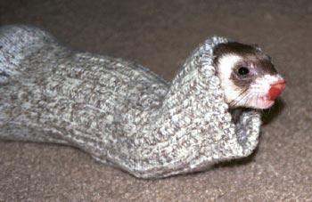 Sock-snake Panda