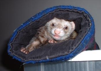 Pandora in the sleep tube