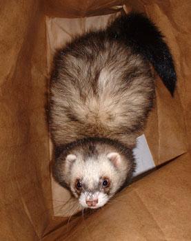 Jax in a paper bag