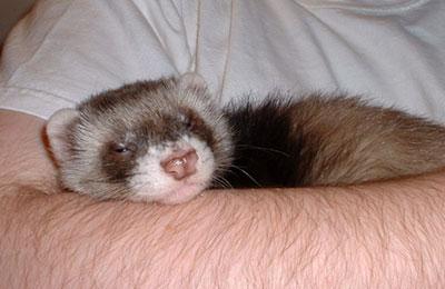 Baby Jax cuddling with Jeremy