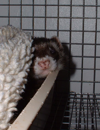 Sleepy Ragnarok