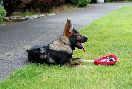 Freyja with her frisbee