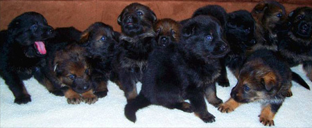 Freyja's litter (about 4 weeks?)
