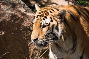 Read more about the article Cheyenne Mountain Zoo